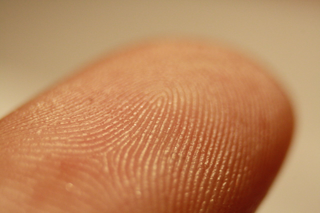 1280px-Fingerprint_detail_on_male_finger